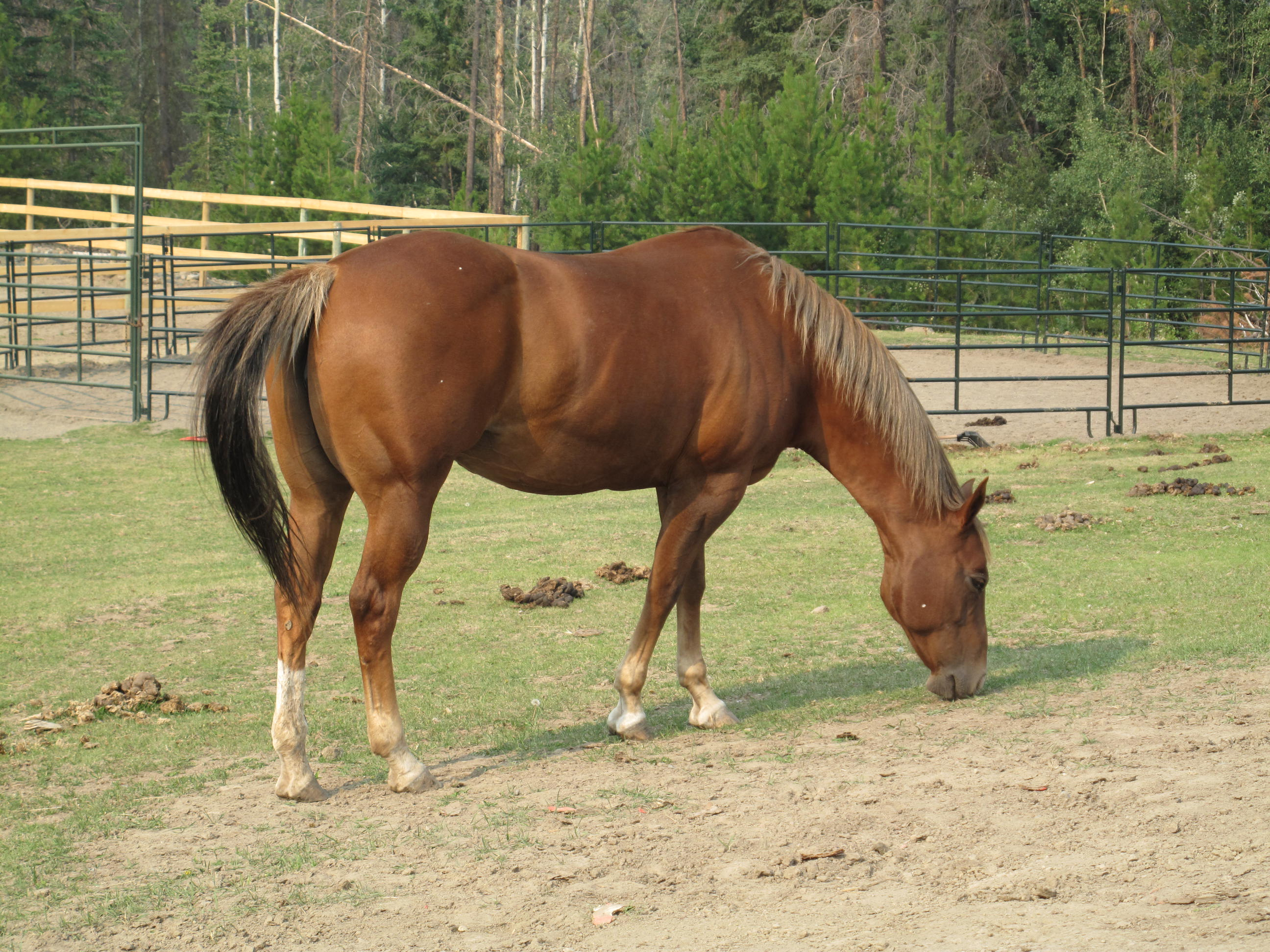 Image Gallery horse ma...